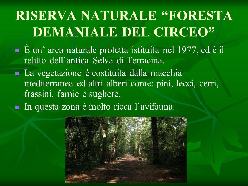 """RISERVA NATURALE """"FORESTA DEMANIALE DEL CIRCEO"""" È un' area naturale protetta istituita nel 1977, ed è il relitto dell'antica Selva di Terracina. La ve"""