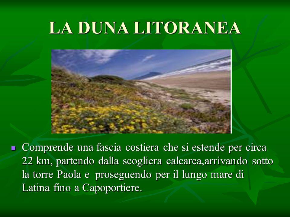 LA DUNA LITORANEA Comprende una fascia costiera che si estende per circa 22 km, partendo dalla scogliera calcarea,arrivando sotto la torre Paola e pro
