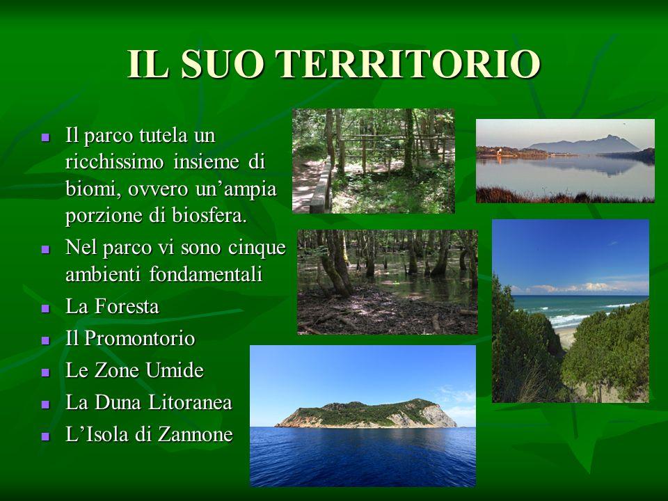 IL SUO TERRITORIO Il parco tutela un ricchissimo insieme di biomi, ovvero un'ampia porzione di biosfera. Il parco tutela un ricchissimo insieme di bio