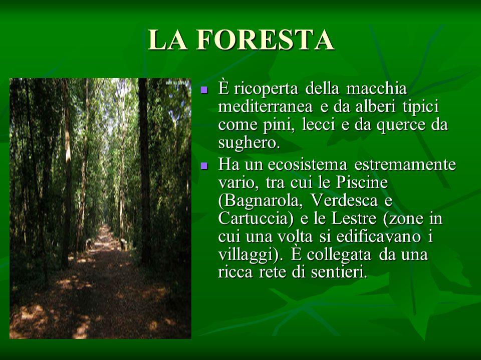 LA FORESTA È ricoperta della macchia mediterranea e da alberi tipici come pini, lecci e da querce da sughero. È ricoperta della macchia mediterranea e