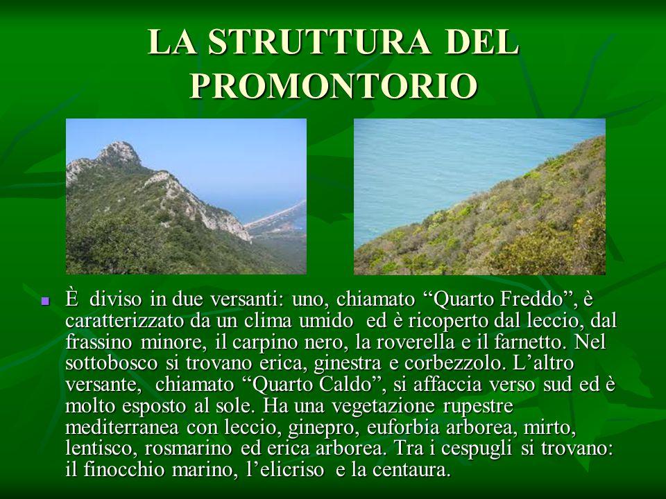 """LA STRUTTURA DEL PROMONTORIO È diviso in due versanti: uno, chiamato """"Quarto Freddo"""", è caratterizzato da un clima umido ed è ricoperto dal leccio, da"""
