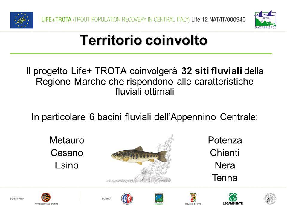 Territorio coinvolto Il progetto Life+ TROTA coinvolgerà 32 siti fluviali della Regione Marche che rispondono alle caratteristiche fluviali ottimali In particolare 6 bacini fluviali dell'Appennino Centrale: 10 Metauro Cesano Esino Potenza Chienti Nera Tenna