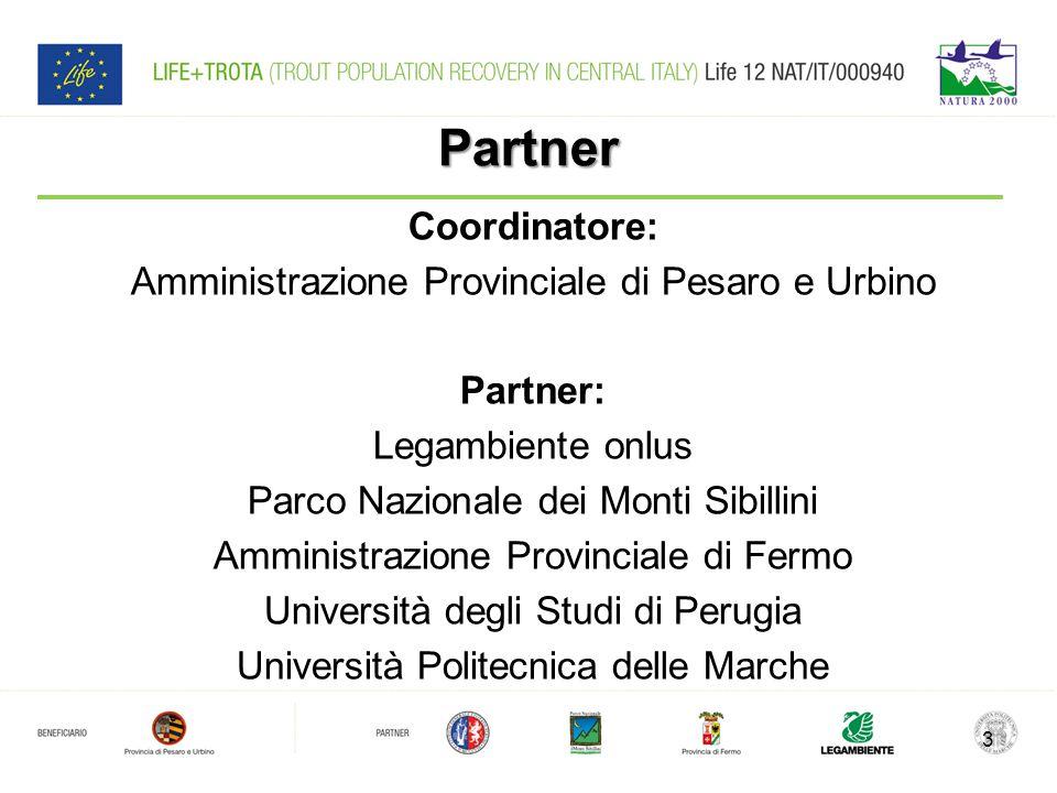 Obiettivo Conservare le popolazioni esistenti di trota mediterranea (Salmo macrostigma) l unica trota originaria dell Italia centro- meridionale 4