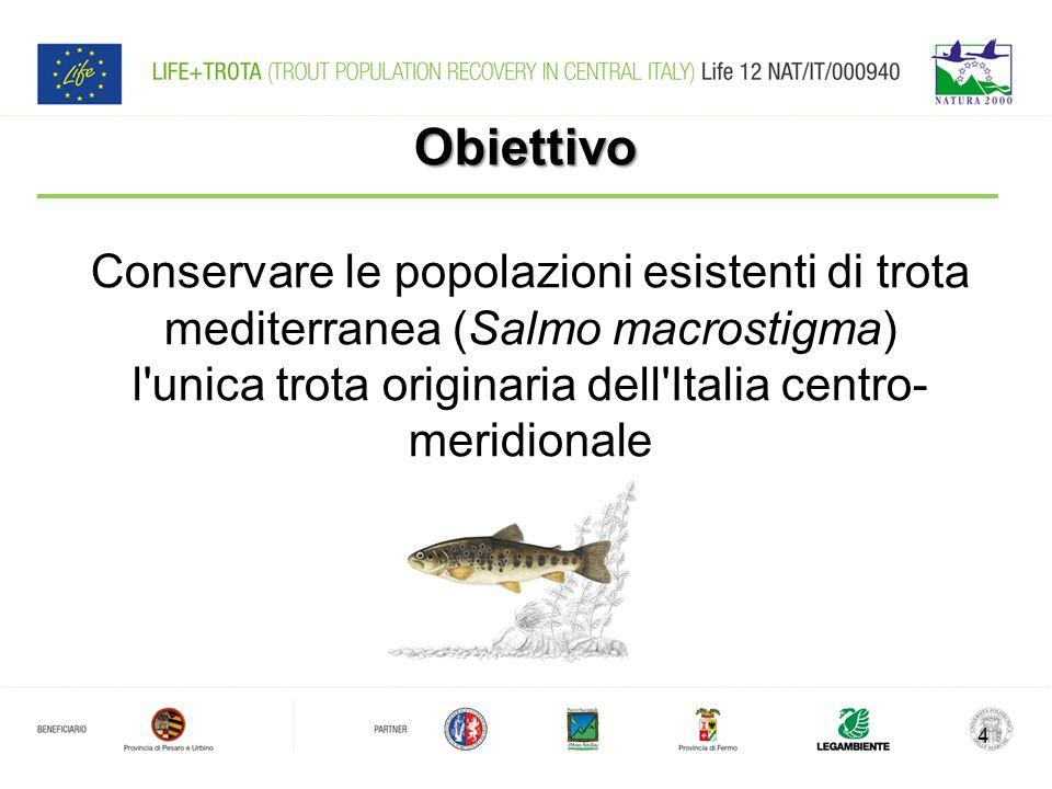 Grazie per l'attenzione! Tarcisio Porto Amministrazione Provinciale di Pesaro e Urbino 15