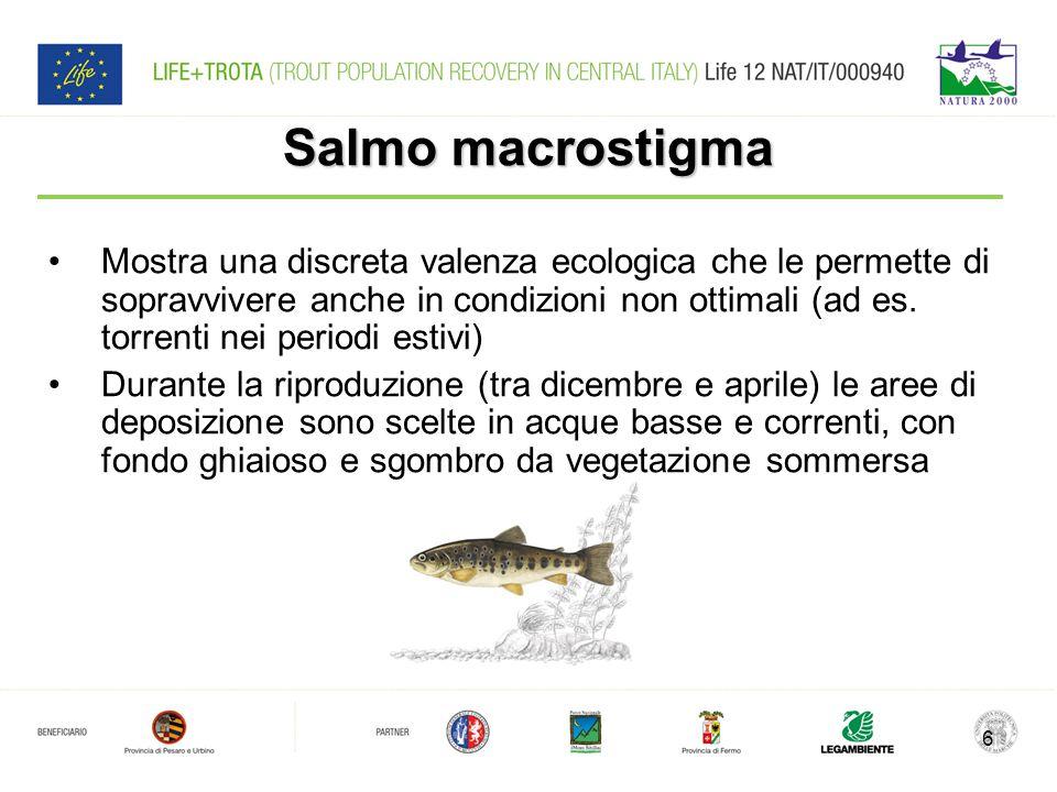 Salmo macrostigma Mostra una discreta valenza ecologica che le permette di sopravvivere anche in condizioni non ottimali (ad es.