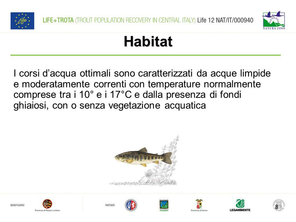 Habitat I corsi d'acqua ottimali sono caratterizzati da acque limpide e moderatamente correnti con temperature normalmente comprese tra i 10° e i 17°C e dalla presenza di fondi ghiaiosi, con o senza vegetazione acquatica 8