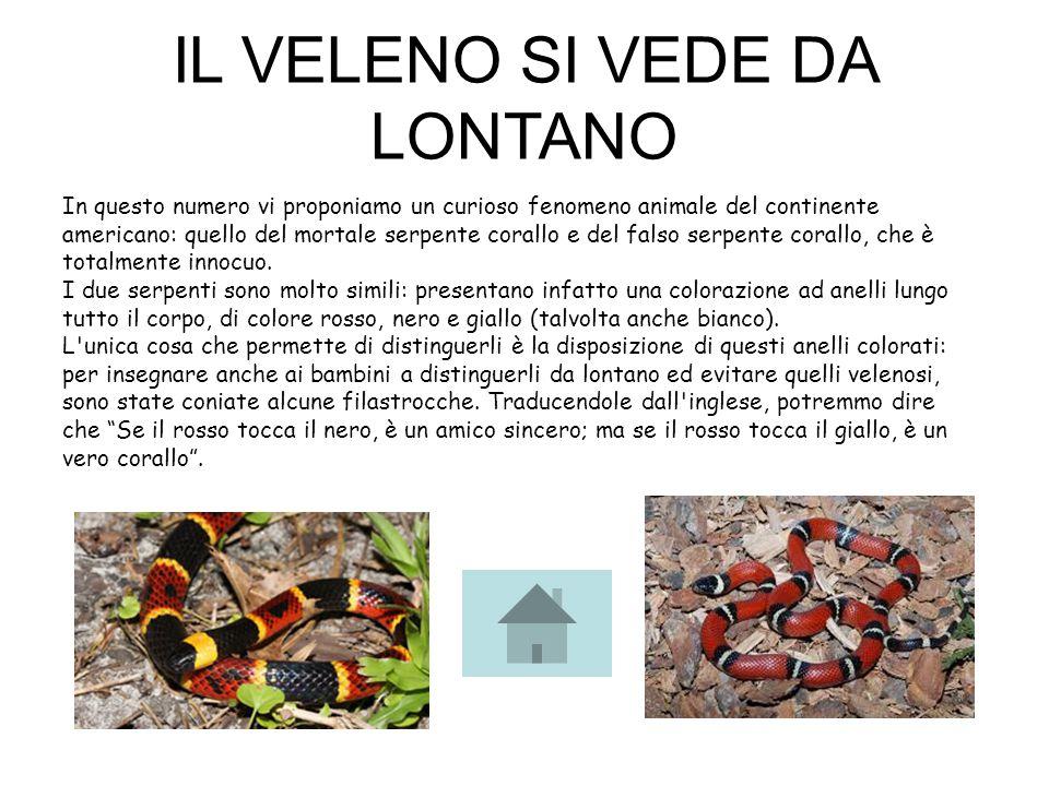 In questo numero vi proponiamo un curioso fenomeno animale del continente americano: quello del mortale serpente corallo e del falso serpente corallo,