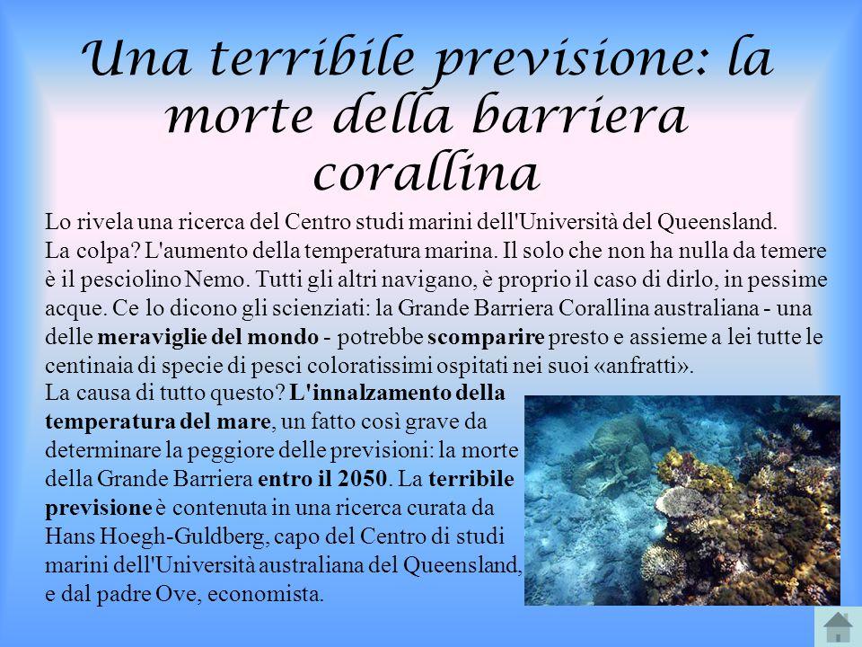 Una terribile previsione: la morte della barriera corallina Lo rivela una ricerca del Centro studi marini dell'Università del Queensland. La colpa? L'