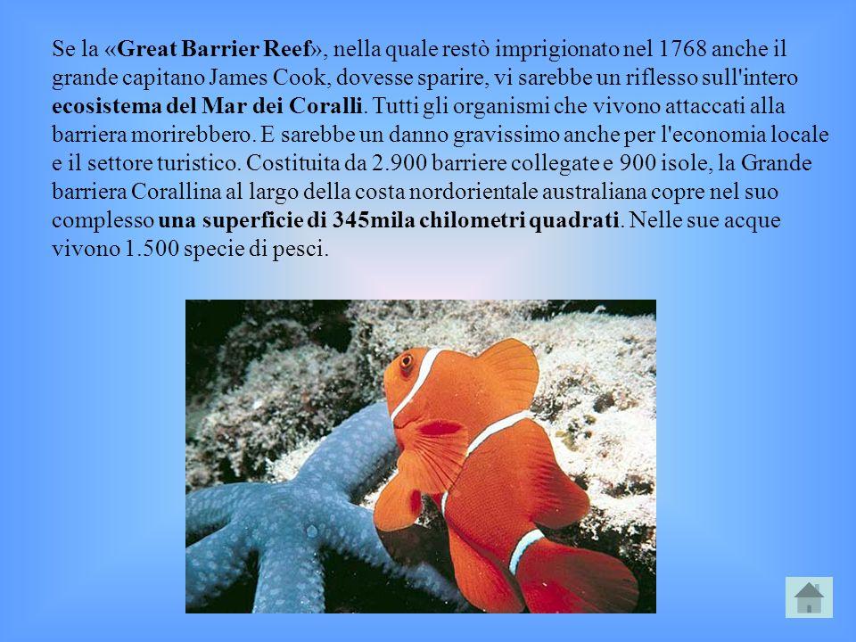 Se la «Great Barrier Reef», nella quale restò imprigionato nel 1768 anche il grande capitano James Cook, dovesse sparire, vi sarebbe un riflesso sull'