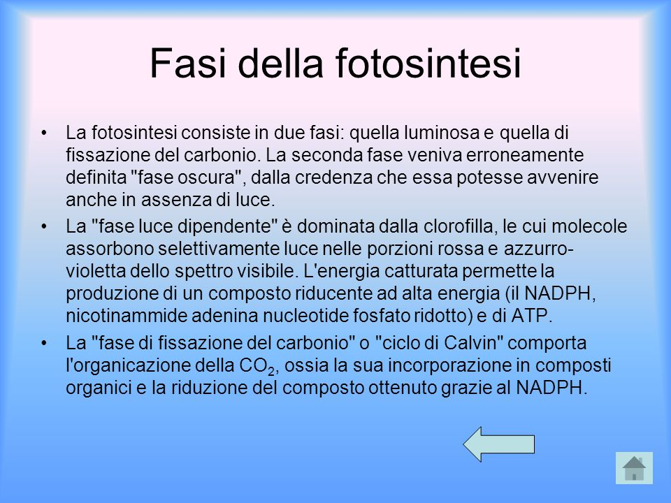 Fasi della fotosintesi La fotosintesi consiste in due fasi: quella luminosa e quella di fissazione del carbonio. La seconda fase veniva erroneamente d