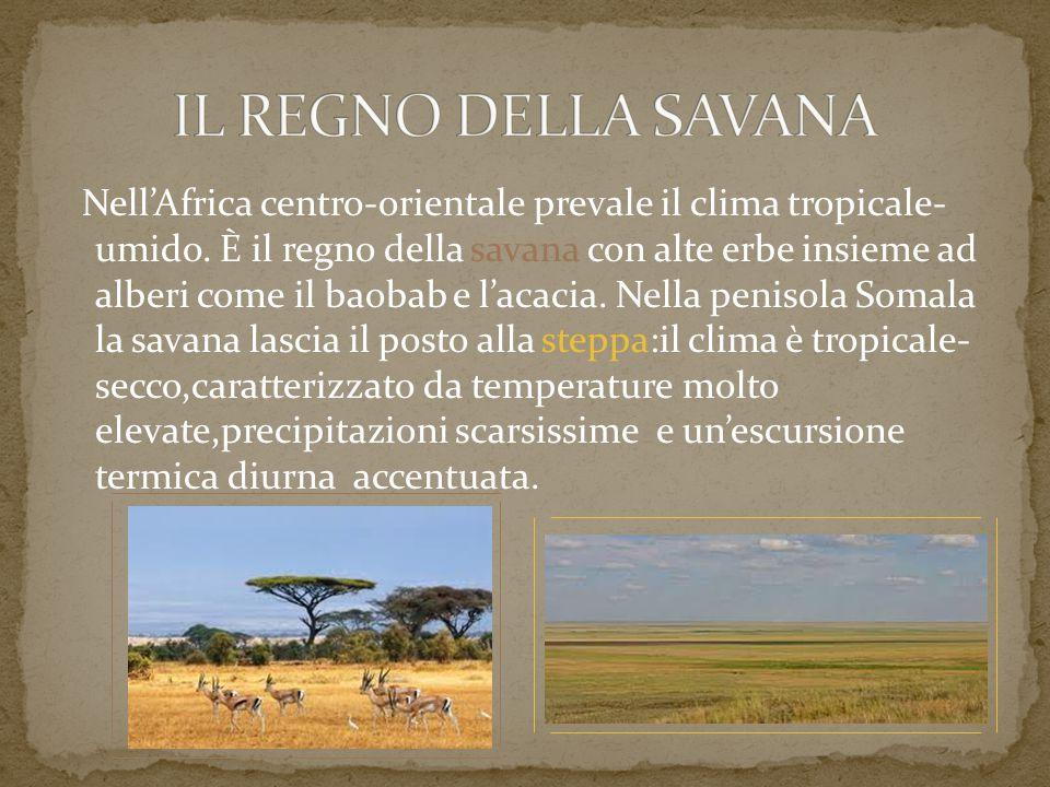 Nell'Africa centro-orientale prevale il clima tropicale- umido. È il regno della savana con alte erbe insieme ad alberi come il baobab e l'acacia. Nel