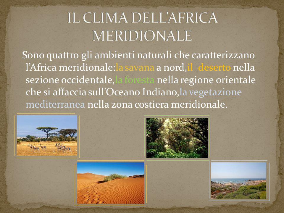 Sono quattro gli ambienti naturali che caratterizzano l'Africa meridionale:la savana a nord,il deserto nella sezione occidentale,la foresta nella regi