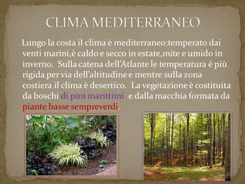 Lungo la costa il clima è mediterraneo:temperato dai venti marini,è caldo e secco in estate,mite e umido in inverno. Sulla catena dell'Atlante le temp
