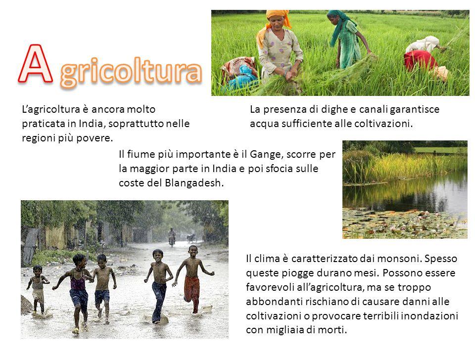 L'agricoltura è ancora molto praticata in India, soprattutto nelle regioni più povere. La presenza di dighe e canali garantisce acqua sufficiente alle
