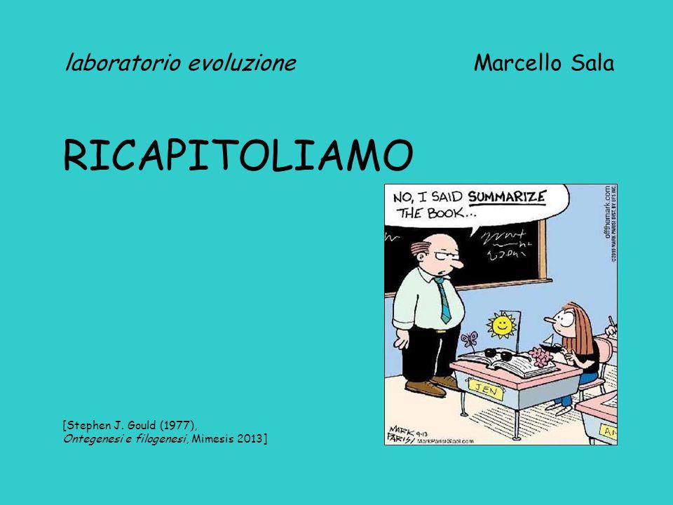 laboratorio evoluzione Marcello Sala RICAPITOLIAMO [Stephen J.