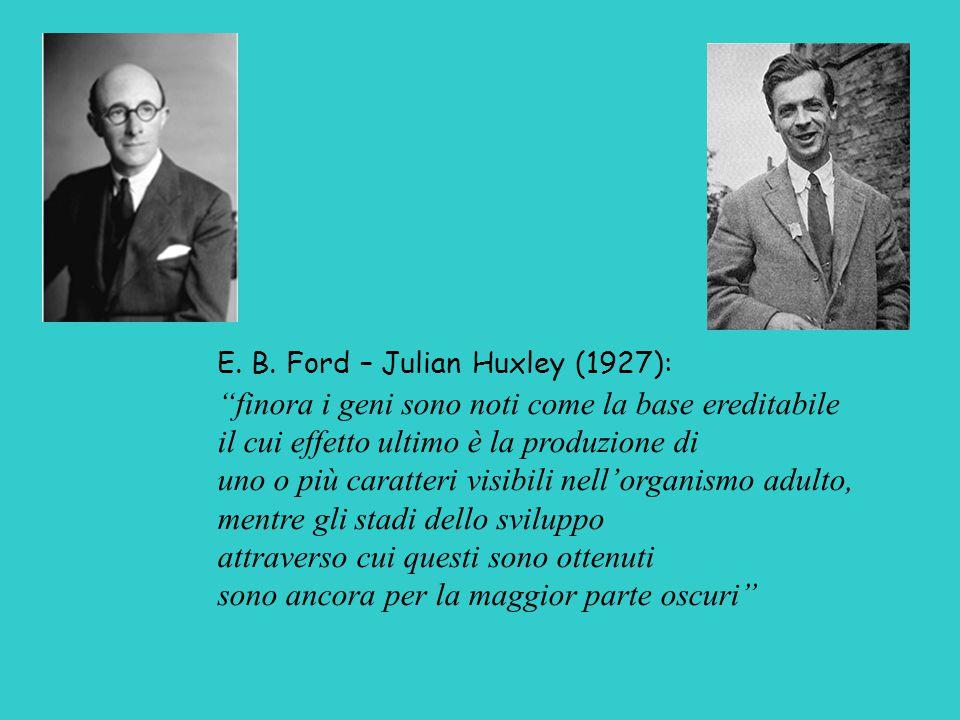 """E. B. Ford – Julian Huxley (1927): """"finora i geni sono noti come la base ereditabile il cui effetto ultimo è la produzione di uno o più caratteri visi"""