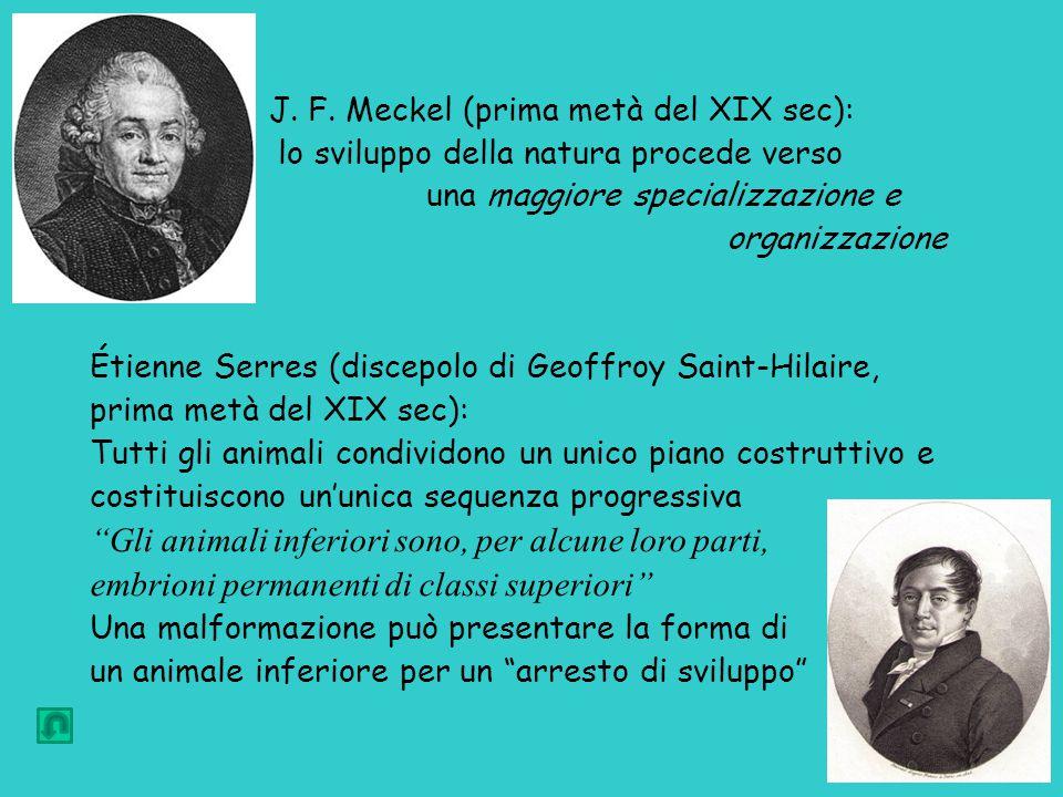 J. F. Meckel (prima metà del XIX sec): lo sviluppo della natura procede verso una maggiore specializzazione e organizzazione Étienne Serres (discepolo