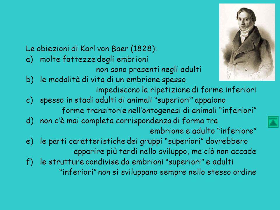 Le obiezioni di Karl von Baer (1828): a)molte fattezze degli embrioni non sono presenti negli adulti b)le modalità di vita di un embrione spesso impediscono la ripetizione di forme inferiori c)spesso in stadi adulti di animali superiori appaiono forme transitorie nell'ontogenesi di animali inferiori d)non c'è mai completa corrispondenza di forma tra embrione e adulto inferiore e)le parti caratteristiche dei gruppi superiori dovrebbero apparire più tardi nello sviluppo, ma ciò non accade f)le strutture condivise da embrioni superiori e adulti inferiori non si sviluppano sempre nello stesso ordine