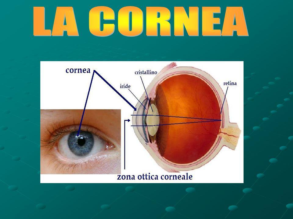 La cornea è una membrana trasparente convessa anteriormente che costituisce la porzione anteriore del bulbo oculare e rappresenta la lente più potente dell apparato visivo.