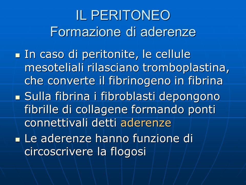 IL PERITONEO Formazione di aderenze In caso di peritonite, le cellule mesoteliali rilasciano tromboplastina, che converte il fibrinogeno in fibrina In caso di peritonite, le cellule mesoteliali rilasciano tromboplastina, che converte il fibrinogeno in fibrina Sulla fibrina i fibroblasti depongono fibrille di collagene formando ponti connettivali detti aderenze Sulla fibrina i fibroblasti depongono fibrille di collagene formando ponti connettivali detti aderenze Le aderenze hanno funzione di circoscrivere la flogosi Le aderenze hanno funzione di circoscrivere la flogosi