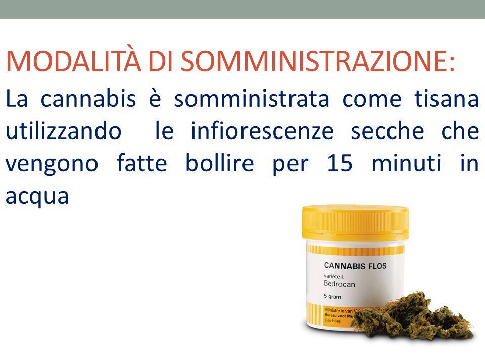 MODALITÀ DI SOMMINISTRAZIONE: La cannabis è somministrata come tisana utilizzando le infiorescenze secche che vengono fatte bollire per 15 minuti in a
