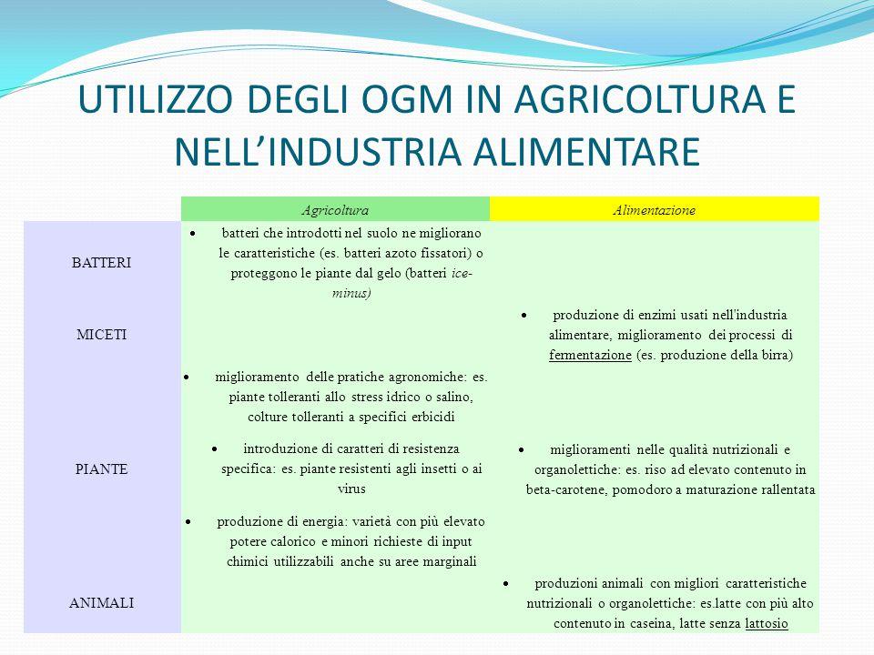 UTILIZZO DEGLI OGM IN AGRICOLTURA E NELL'INDUSTRIA ALIMENTARE AgricolturaAlimentazione BATTERI  batteri che introdotti nel suolo ne migliorano le car