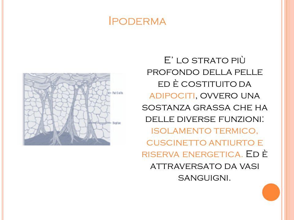 I PODERMA E' lo strato più profondo della pelle ed è costituito da adipociti, ovvero una sostanza grassa che ha delle diverse funzioni: isolamento ter