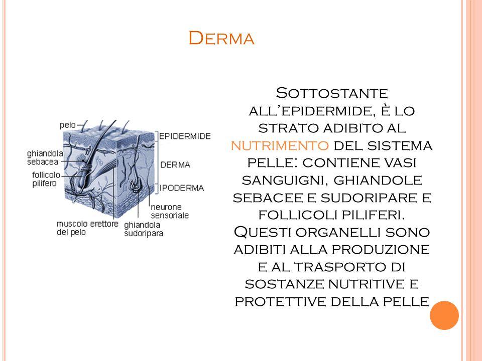 D ERMA Sottostante all'epidermide, è lo strato adibito al nutrimento del sistema pelle: contiene vasi sanguigni, ghiandole sebacee e sudoripare e foll