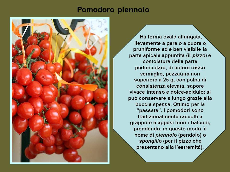 Solo verso la fine del 1700 si trova uso del frutto della pianta in cucina. Da allora il suo uso culinario si diffuse velocemente in tutto il mondo. I