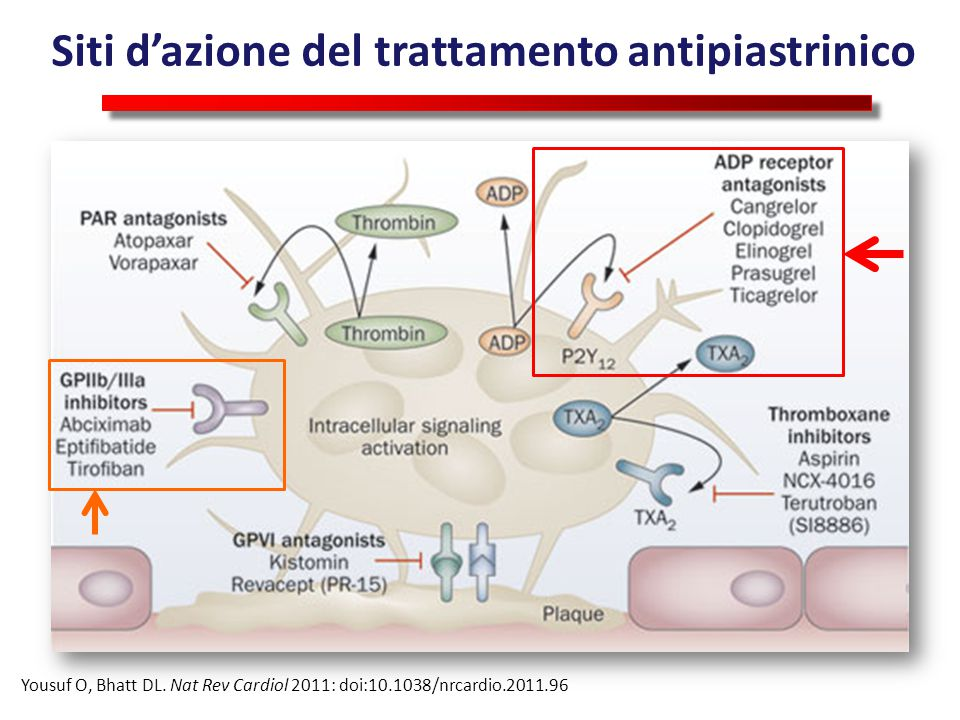 Figure 2 Targeted antiplatelet therapies Yousuf, O.