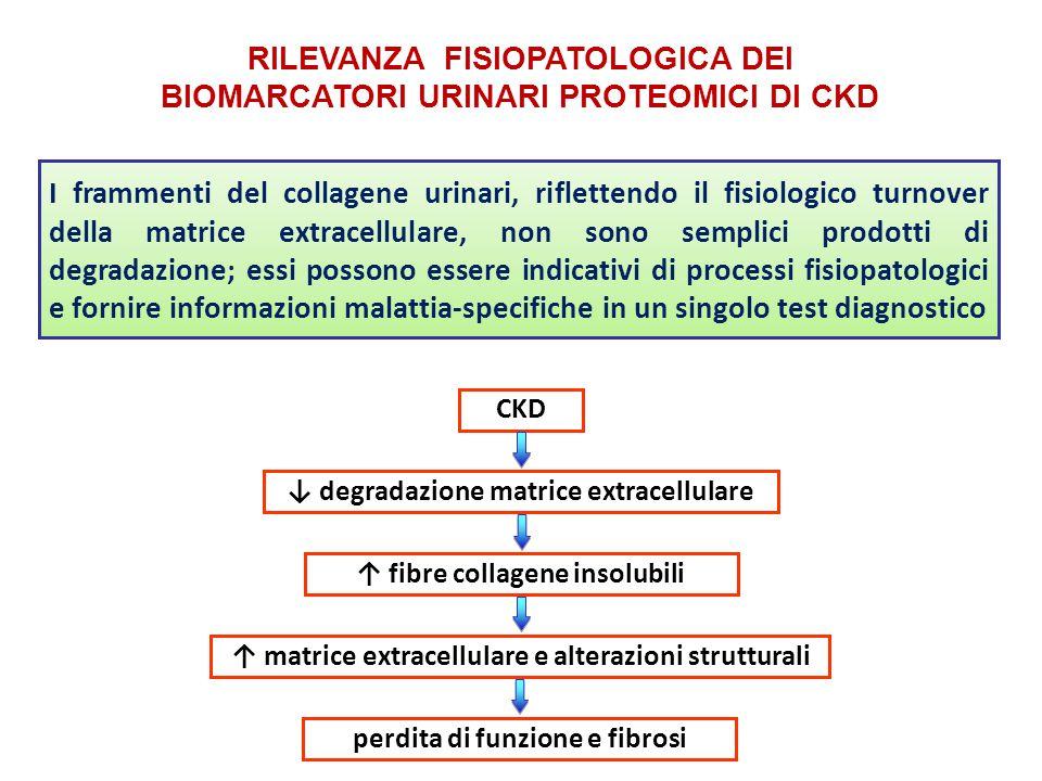RILEVANZA FISIOPATOLOGICA DEI BIOMARCATORI URINARI PROTEOMICI DI CKD I frammenti del collagene urinari, riflettendo il fisiologico turnover della matr