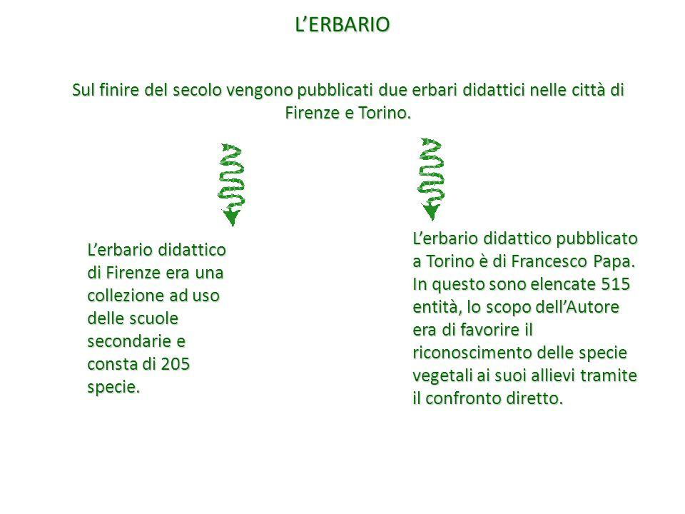 L'ERBARIO Sul finire del secolo vengono pubblicati due erbari didattici nelle città di Firenze e Torino. L'erbario didattico di Firenze era una collez