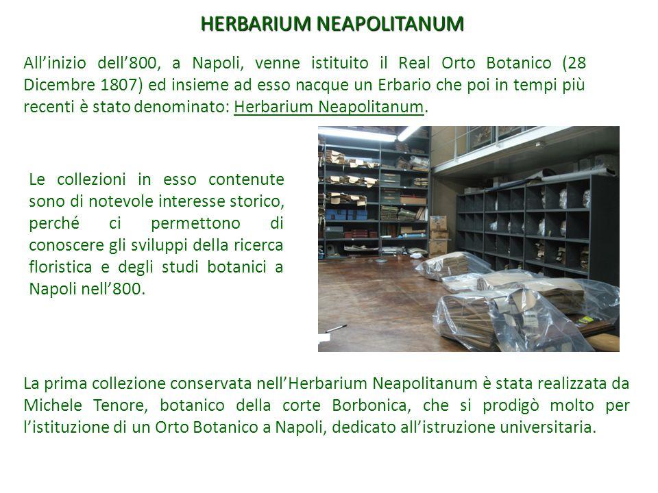 All'inizio dell'800, a Napoli, venne istituito il Real Orto Botanico (28 Dicembre 1807) ed insieme ad esso nacque un Erbario che poi in tempi più rece