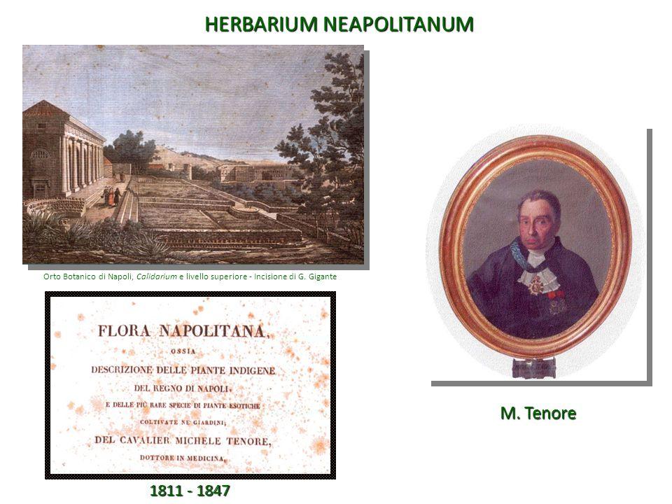 1811 - 1847 Orto Botanico di Napoli, Calidarium e livello superiore - Incisione di G. Gigante M. Tenore HERBARIUM NEAPOLITANUM