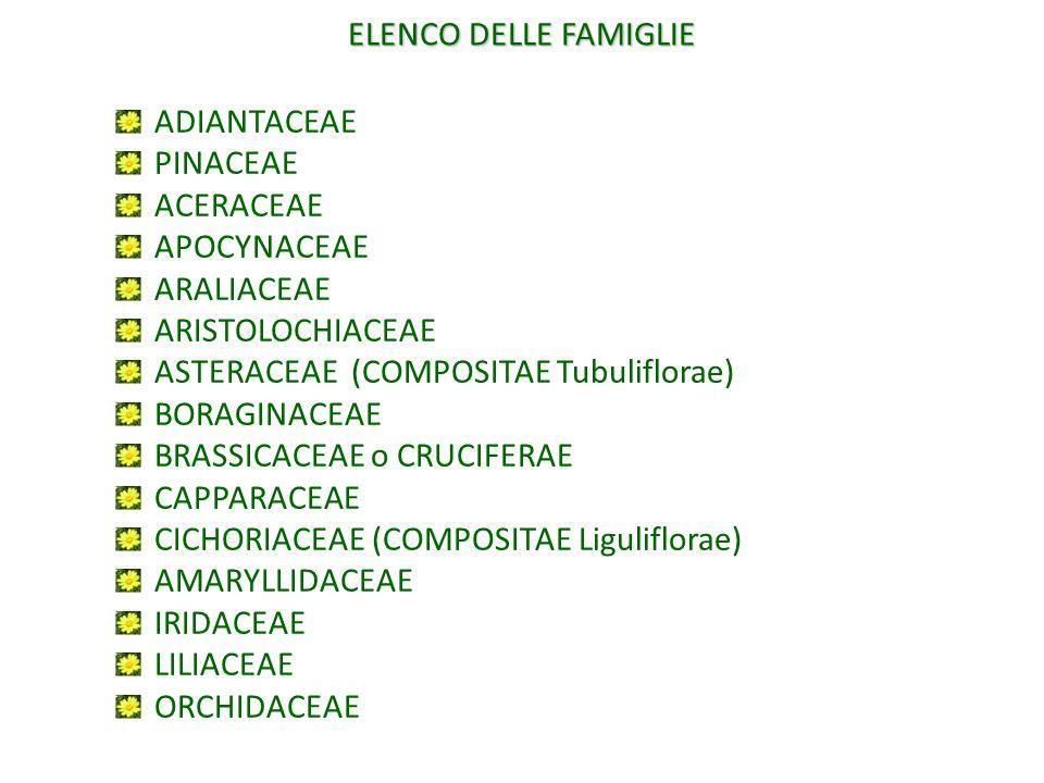 ELENCO DELLE FAMIGLIE ADIANTACEAE PINACEAE ACERACEAE APOCYNACEAE ARALIACEAE ARISTOLOCHIACEAE ASTERACEAE (COMPOSITAE Tubuliflorae) BORAGINACEAE BRASSIC