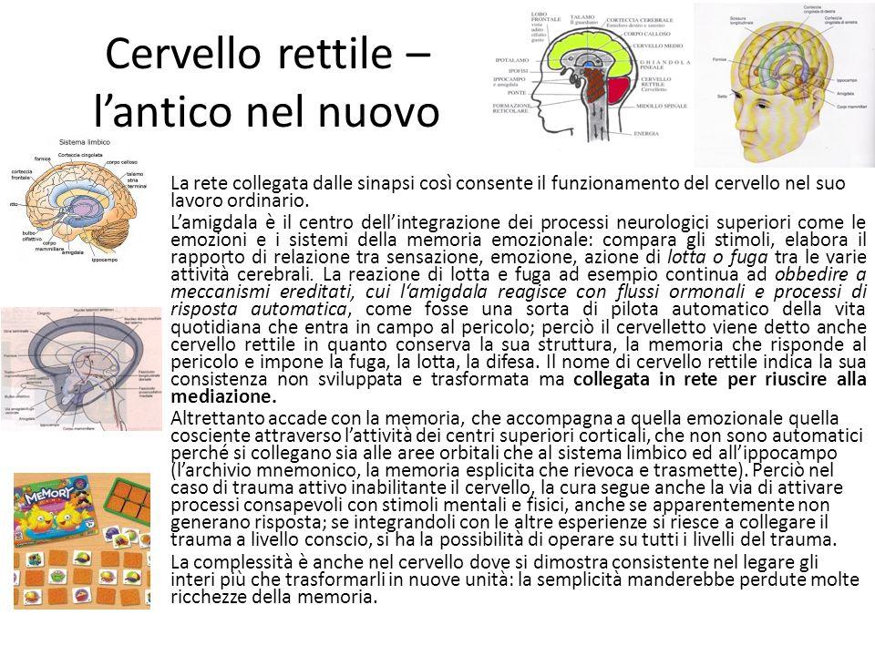 Cervello rettile – l'antico nel nuovo La rete collegata dalle sinapsi così consente il funzionamento del cervello nel suo lavoro ordinario. L'amigdala