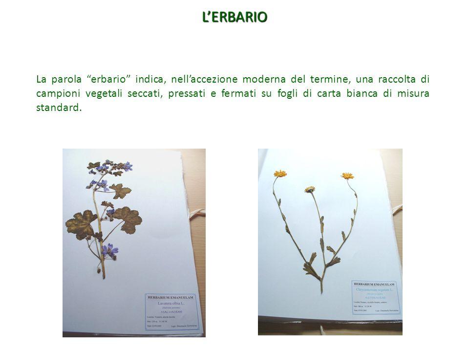 """La parola """"erbario"""" indica, nell'accezione moderna del termine, una raccolta di campioni vegetali seccati, pressati e fermati su fogli di carta bianca"""