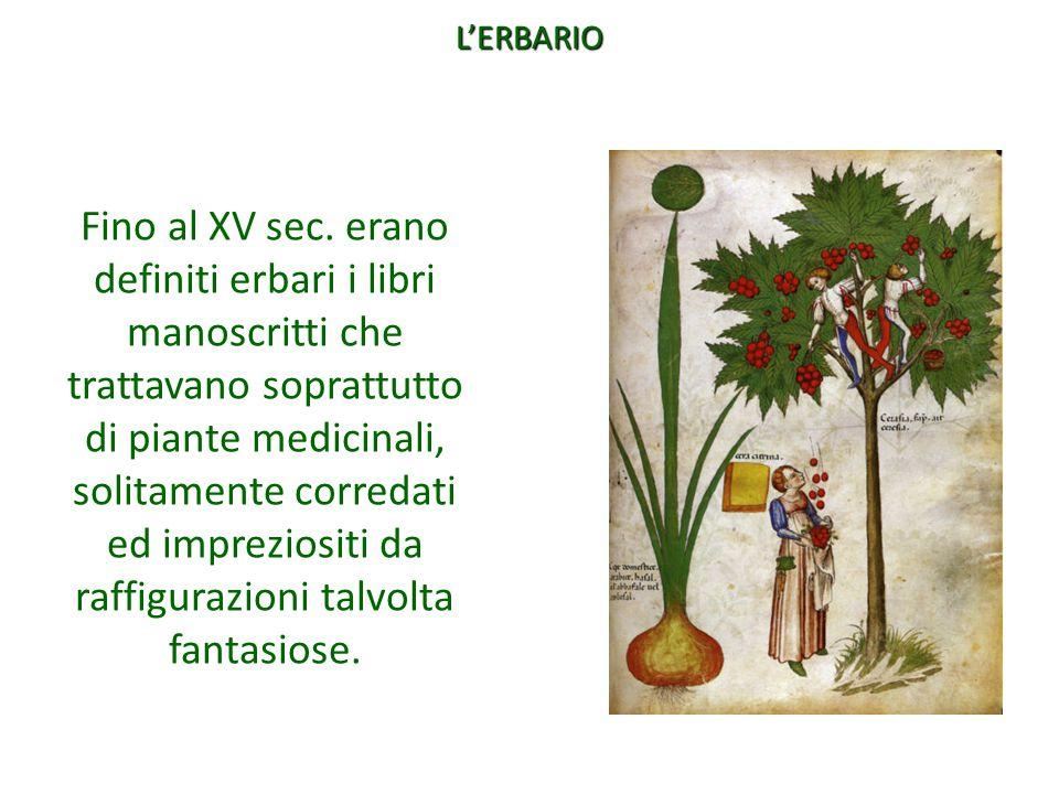 Fino al XV sec. erano definiti erbari i libri manoscritti che trattavano soprattutto di piante medicinali, solitamente corredati ed impreziositi da ra