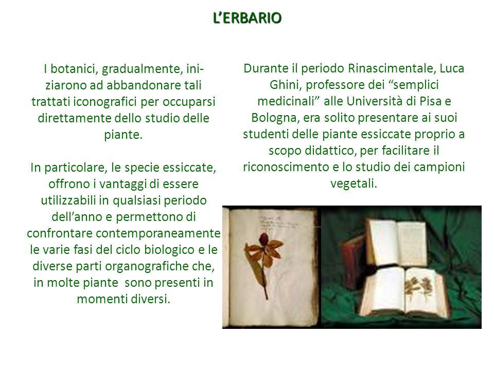 """Durante il periodo Rinascimentale, Luca Ghini, professore dei """"semplici medicinali"""" alle Università di Pisa e Bologna, era solito presentare ai suoi s"""