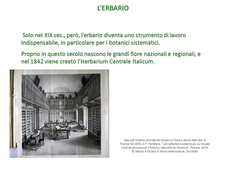 L'ERBARIO Solo nel XIX sec., però, l'erbario diventa uno strumento di lavoro indispensabile, in particolare per i botanici sistematici. Solo nel XIX s