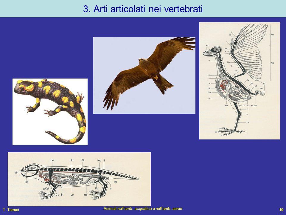 T. Terrani Animali nell'amb. acquatico e nell'amb. aereo 10 3. Arti articolati nei vertebrati