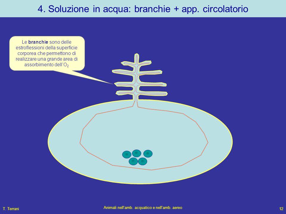 T. Terrani Animali nell'amb. acquatico e nell'amb. aereo 12 4. Soluzione in acqua: branchie + app. circolatorio Le branchie sono delle estroflessioni