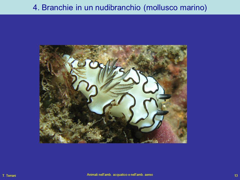 T. Terrani Animali nell'amb. acquatico e nell'amb. aereo 13 4. Branchie in un nudibranchio (mollusco marino)