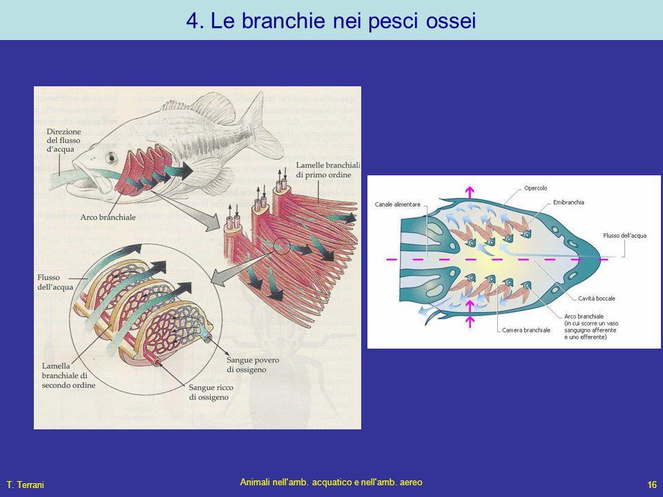 T. Terrani Animali nell'amb. acquatico e nell'amb. aereo 16 4. Le branchie nei pesci ossei