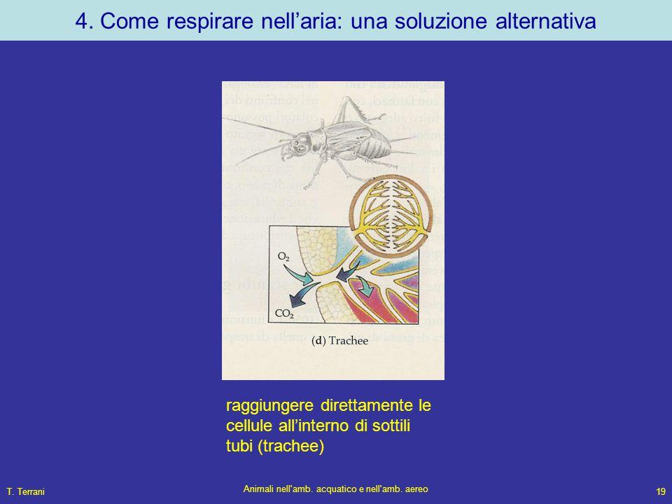 T. Terrani Animali nell'amb. acquatico e nell'amb. aereo 19 4. Come respirare nell'aria: una soluzione alternativa raggiungere direttamente le cellule