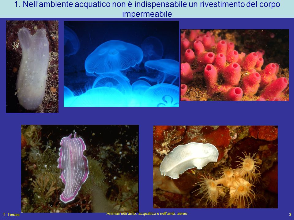T. Terrani Animali nell'amb. acquatico e nell'amb. aereo 3 1. Nell'ambiente acquatico non è indispensabile un rivestimento del corpo impermeabile