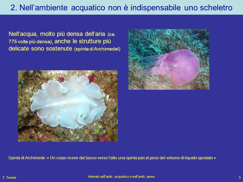 T. Terrani Animali nell'amb. acquatico e nell'amb. aereo 5 2. Nell'ambiente acquatico non è indispensabile uno scheletro Nell'acqua, molto più densa d