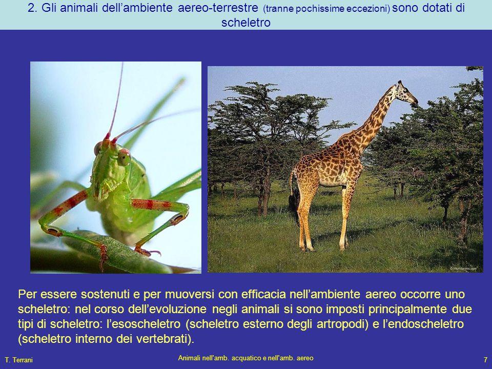T. Terrani Animali nell'amb. acquatico e nell'amb. aereo 7 2. Gli animali dell'ambiente aereo-terrestre (tranne pochissime eccezioni) sono dotati di s