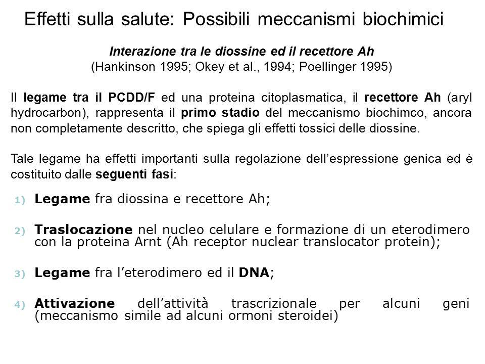 1) Legame fra diossina e recettore Ah; 2) Traslocazione nel nucleo celulare e formazione di un eterodimero con la proteina Arnt (Ah receptor nuclear t