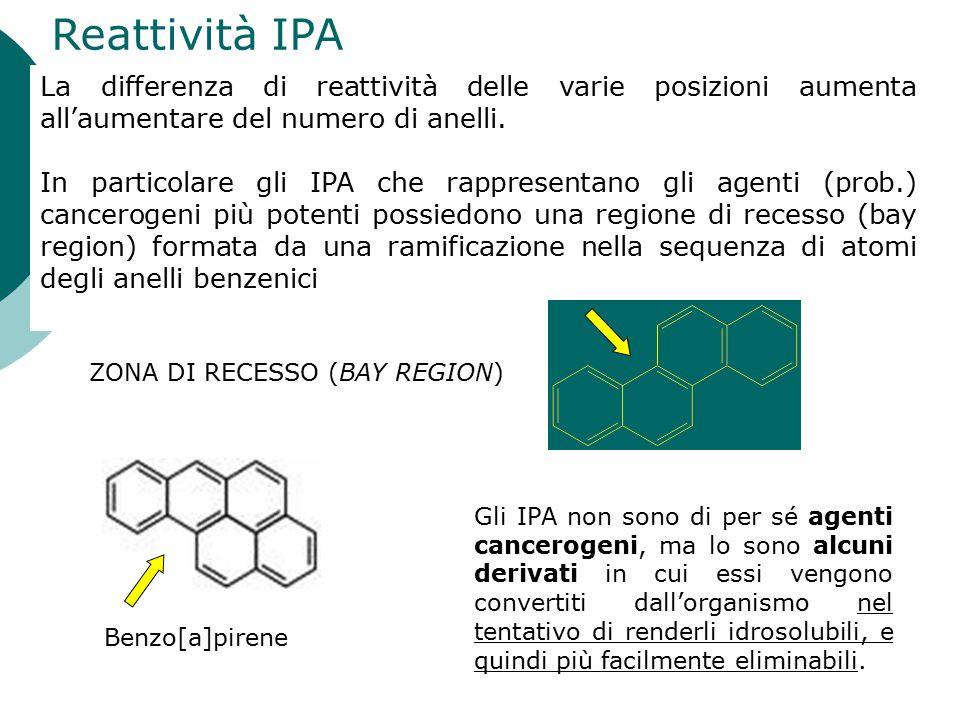 Reattività IPA La differenza di reattività delle varie posizioni aumenta all'aumentare del numero di anelli. In particolare gli IPA che rappresentano